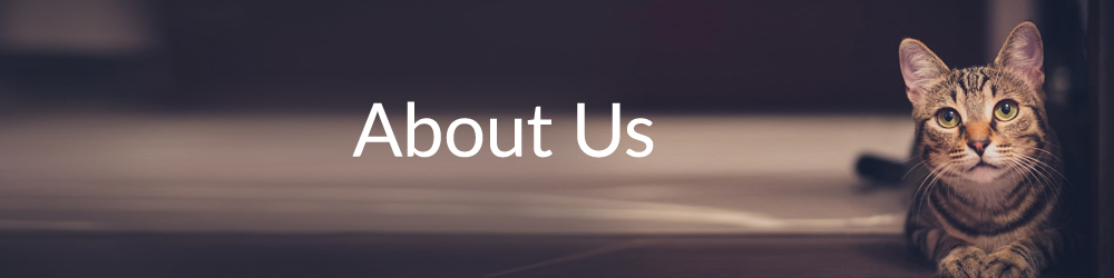 about us 1000px